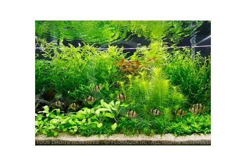 L'aquarium hollandais (160L) by Tropica