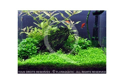 1-2-GROW! by Tropica