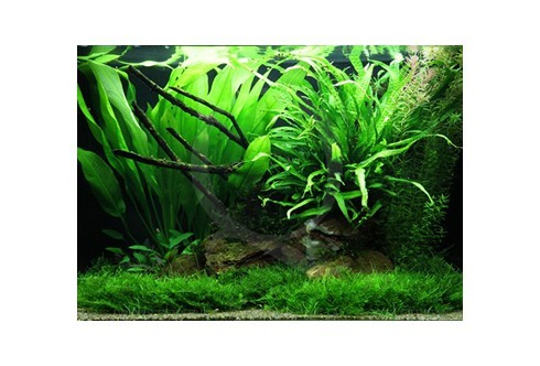 Layout 63 (100L) by Tropica
