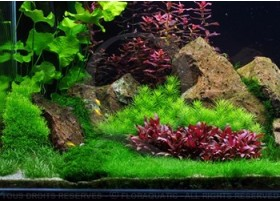 Layout 54 (270L) by Tropica