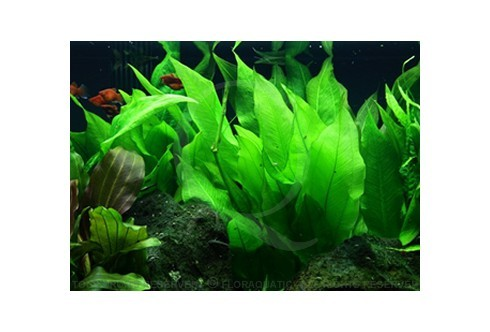 Layout 48 (300L) by Tropica