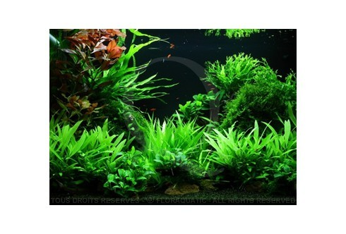 Layout 47 (100L) by Tropica