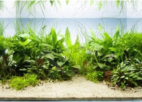 Layout 46 (200L) by Tropica