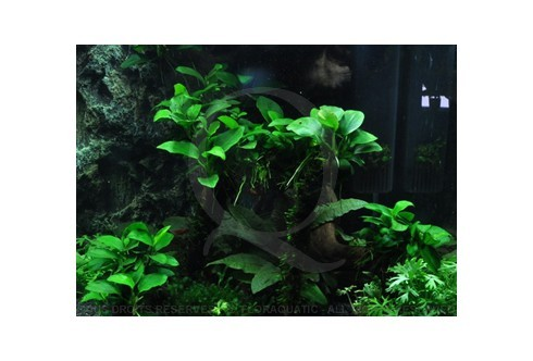Layout 39 (30L) by Tropica