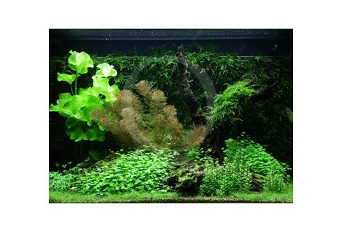 Layout 64 (100L) by Tropica