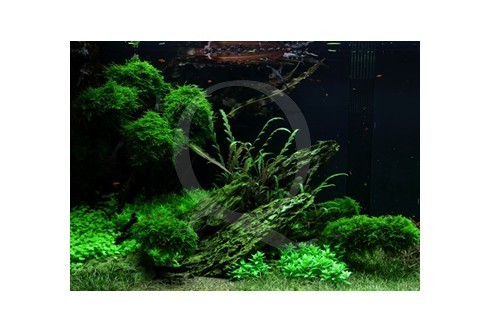 Layout 50 (300L) by Tropica