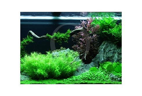 Layout 62 (240L) by Tropica