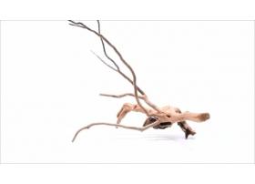 Racine Dark Moor Roots S1103
