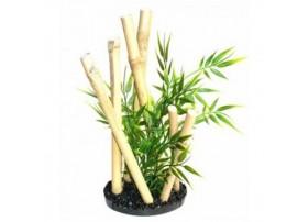 Bamboo GARDEN noir STYLE H:24cm