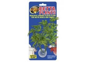 ZOOMED Betta plantepapaya
