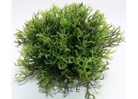 GREEN MOSS XL H:12cm