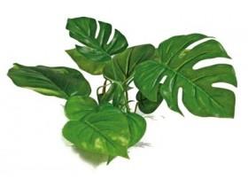 Plante plastique ANUBIAS - Hauteur : 15cm