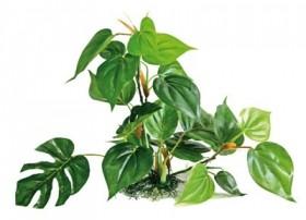 Plante plastique ANUBIAS - Hauteur : 30cm