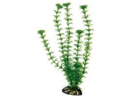 Plante plastique CABOMBA 36cm