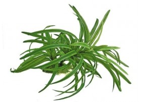Plante plastique DRACENA 25cm