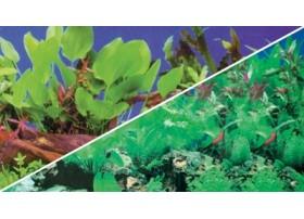 HOBBY Poster plantes 1/5 0.4x25m df