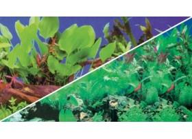 HOBBY Poster plantes 1/5 120x50cm df