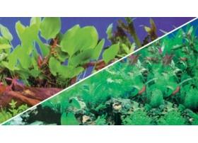 HOBBY Poster plantes 1/5 60x30cm df