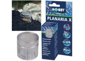 HOBBY Planaria x piège à planaires