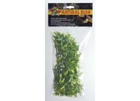 Plante BOLIVIAN CROTON MM -ZM