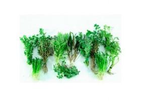 Lot de plantes terrarium - 10 Plantes - racines nues