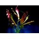 Echinodorus Dschungelstar Nr16 Mamba Rouge
