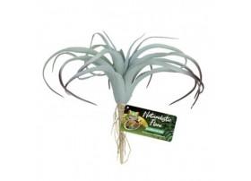 Plante plastique Tillandsia Air - Reptizoo