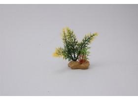 PLANT H:10cm SCALARE