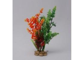 PLANT H:26cm SCALARE