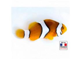Amphiprion percula 4 à 5 cm