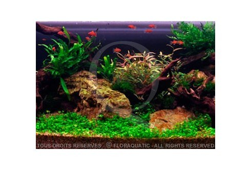 Privilèges de la nature (270L) by Tropica
