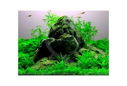 L'aquarium Nano (12L) by tropica