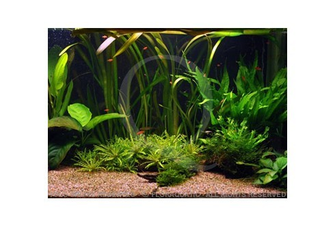 Un bel aquarium – ici et maintenant (128L) by Tropica