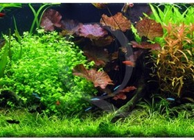 L'aquarium familial (297L) by Tropica