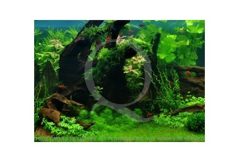 Le bassin tropical (225L) by Tropica
