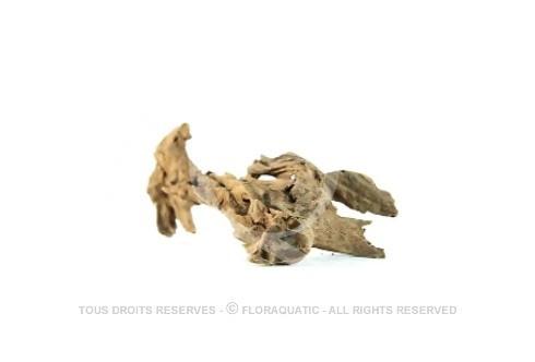 Racine Nue Mangrove S [15 cm - 25 cm]