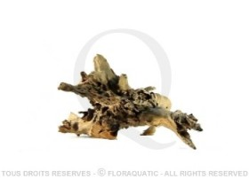 Racine Nue Mangrove L [35 cm - 45 cm]