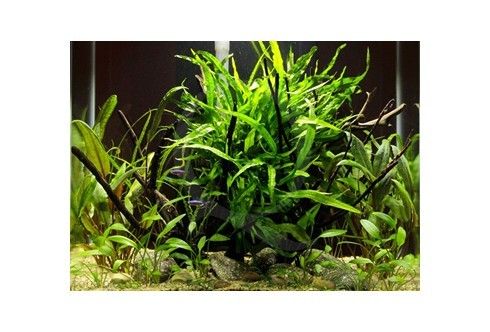 Layout 58 (46L) by Tropica
