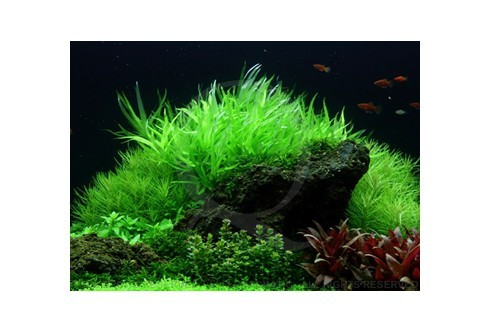 Layout 53 (225L) by Tropica