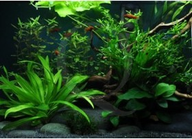 Paix et agitation Layout 36 (54L) by Tropica