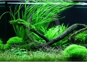 Layout 61 (180L) by Tropica