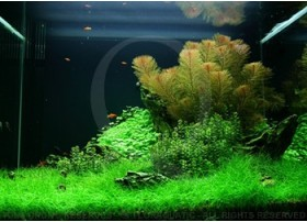 Layout 49 (100L) by Tropica