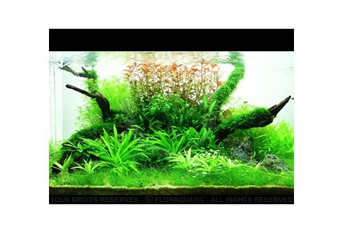 Layout 45 (180L) by Tropica