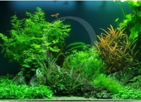 Layout 40 (125L) by Tropica
