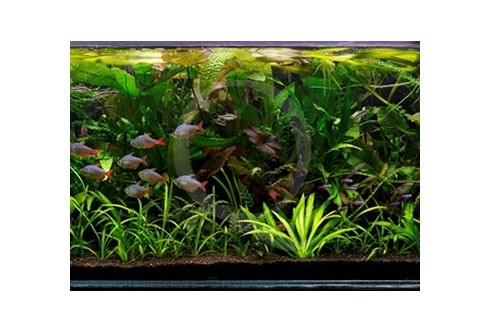 Jungle Layout 25 (240L) by Tropica