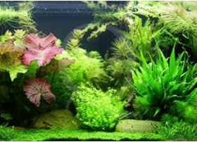 Layout 65 (300L) by Tropica