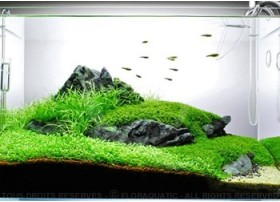 Layout 59 (60L) by Tropica