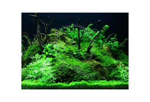 Layout 52 (300L) by Tropica