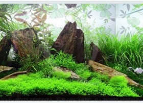 Layout 44 (200L) by Tropica
