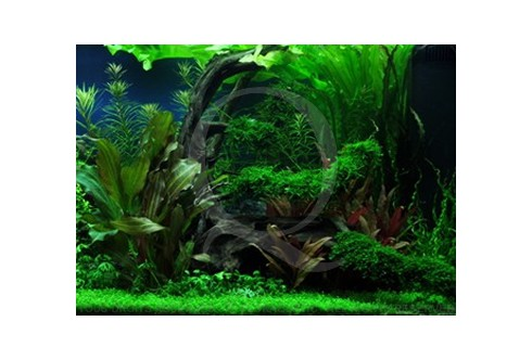 La jungle se rétablie Layout 41 (180L) by Tropica